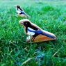 A chunky wooden magpie toy figure in the woods on a tree branch